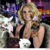 بريتني سبيرز تنفق ثلاثين ألف دولاراً على حيواناتها الأليفة في 2016!